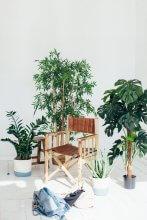 Szellőztetés szobanövényekkel